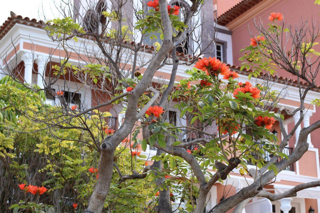 ESCADA-Blumen-Anlage
